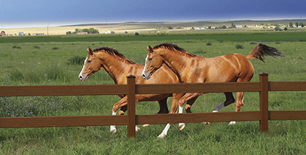 Ranch rail fence for horses
