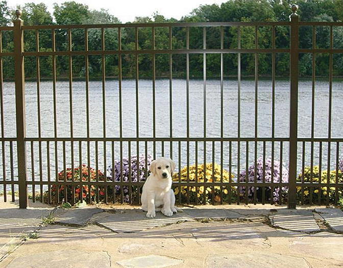 safety pup aluminum fence designed for dogs